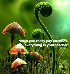 pantheism-teacher