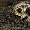 skull-625x350