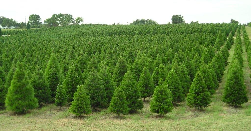 Pagans Christmas Tree